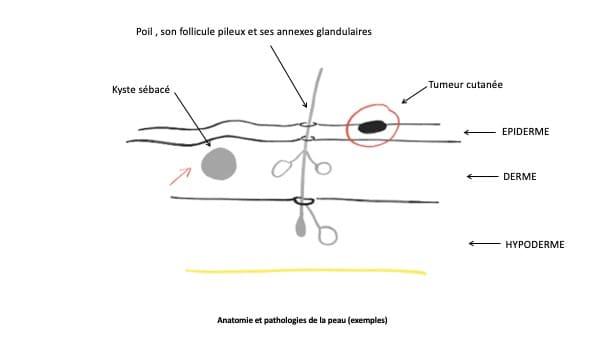 chirurgie dermatologique chirurgie viscerale docteur le toux chirurgien visceral paris 16 chirurgien digestif paris 16